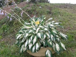 Ka vanast rehvist on võimalik välja võluda kaunis lillekast. Salu küla.